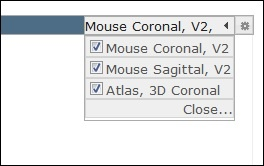 Projection - Mouse Connectivity